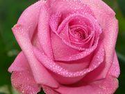 Объемный флористический лак-спрей с эффектом имитации росы.